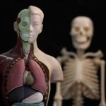 The Lumbar Spine Anatomy