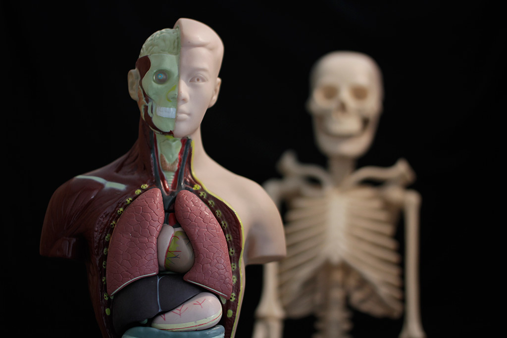 Fabulous Videos About Anatomy