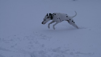 Miranda's dog playing in the snow
