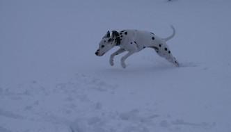 Miranda's dog playing in the snow