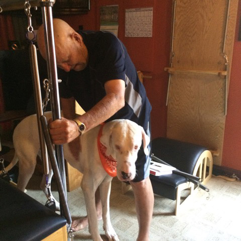 Powder one of Sunni's 3 Great Danes coming in to the studio and making sure I did a good job